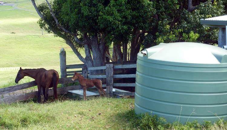 rainwater-tank-in-paddock